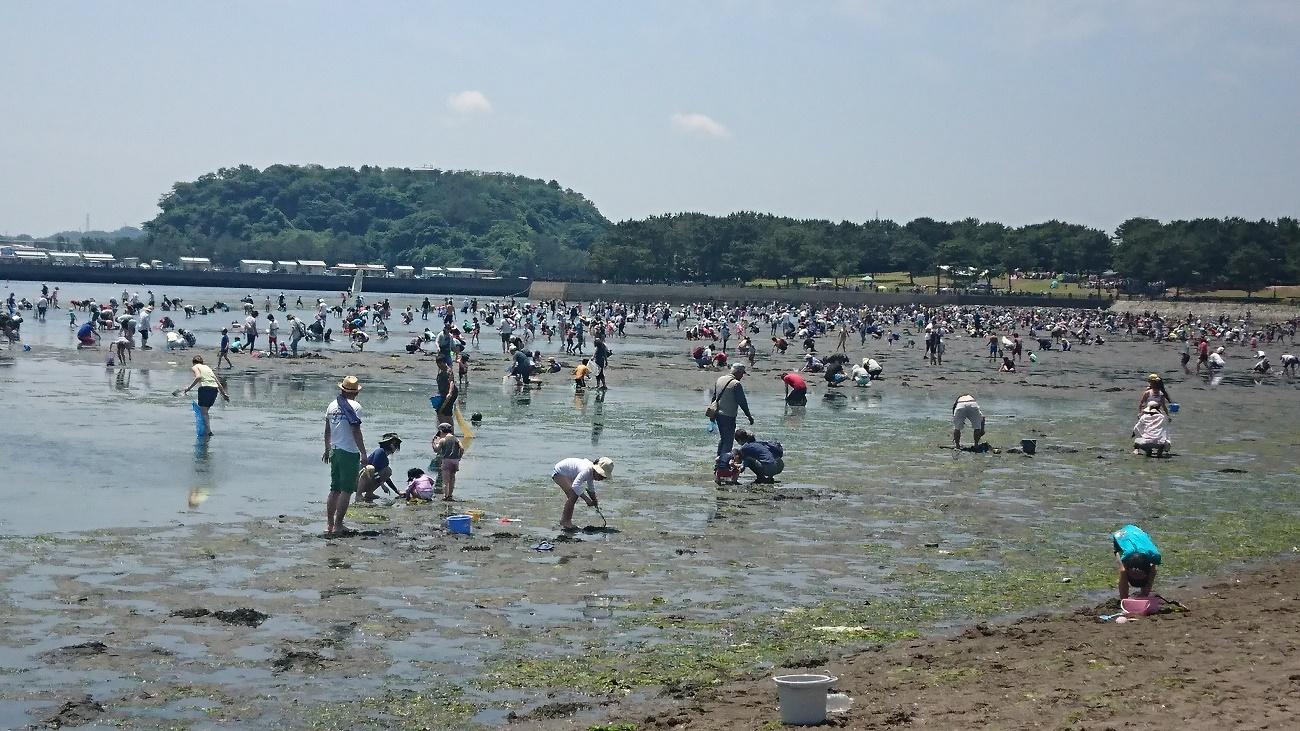 Đào sò miễn phí ở Nhật Bản